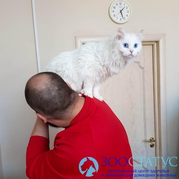 повышенная температура у кошки