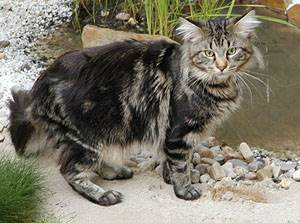 Воспаление тазобедренного сустава у котов ортез levamed на голеностопный сустав