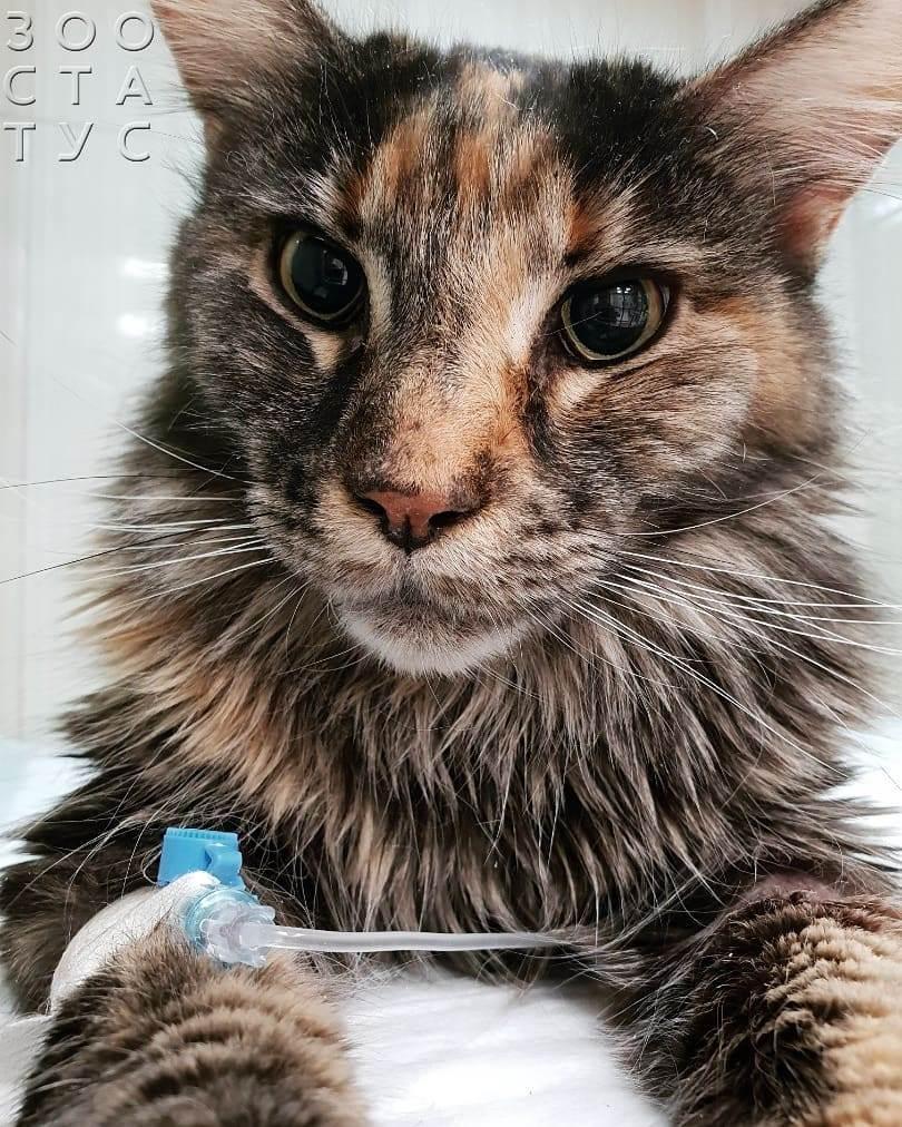хроническая болезнь почек у кошек