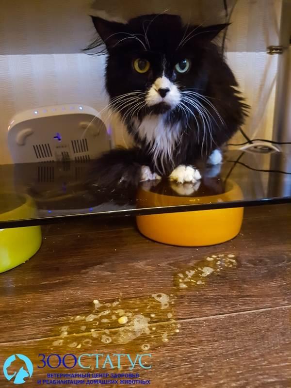 Пенистая рвота у котенка причины