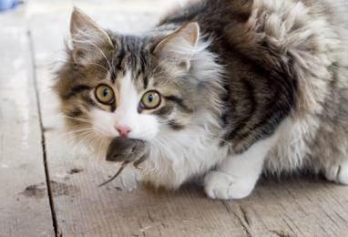 Анализ на токсоплазмоз у котов