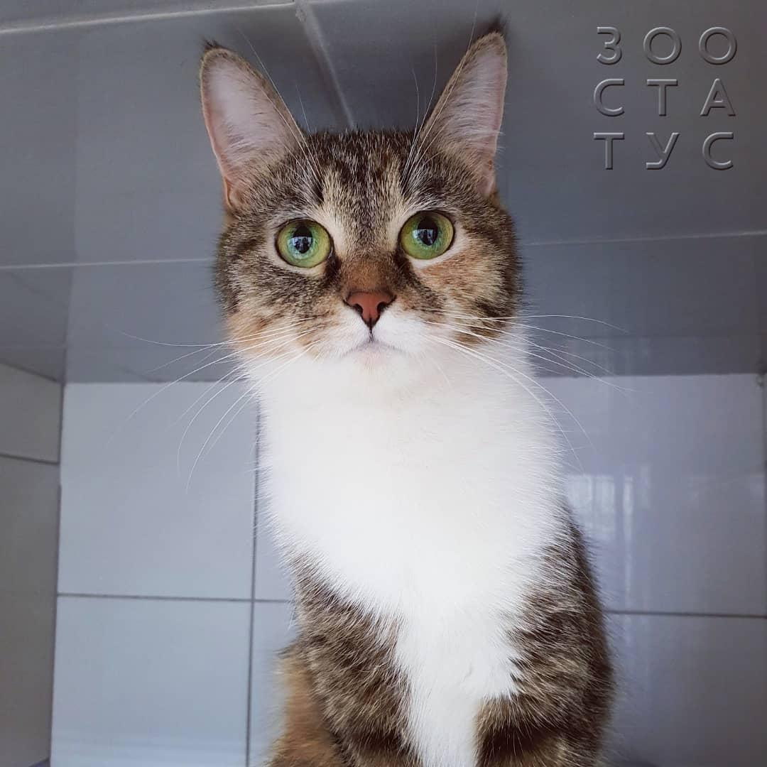 большой живот у кошки